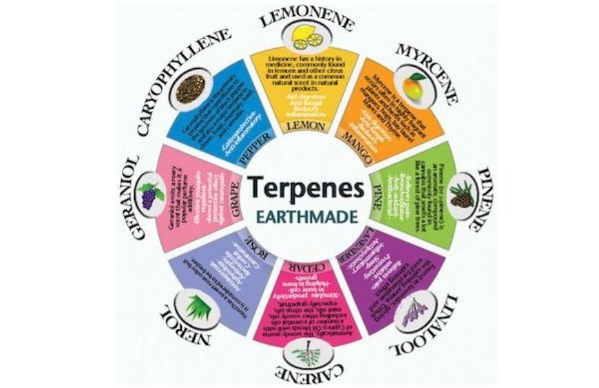 Quels sont les principaux terpènes et quelles sont leurs vertus ?