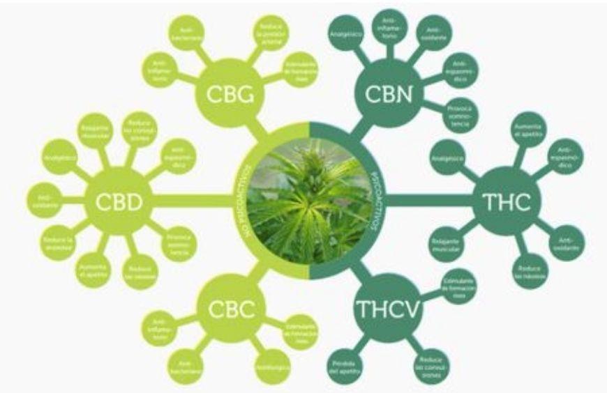 Quels sont les différents cannabinoïdes du chanvre ?