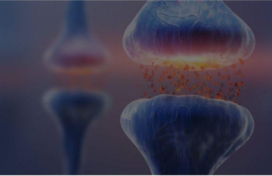 Qu'est-ce que le système endocannabinoïde et quel est son rôle ?